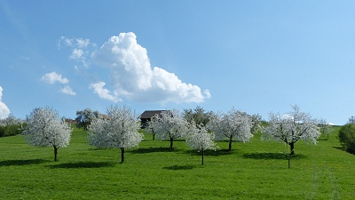 A perfect day when the sky is blue and the blossoms so white