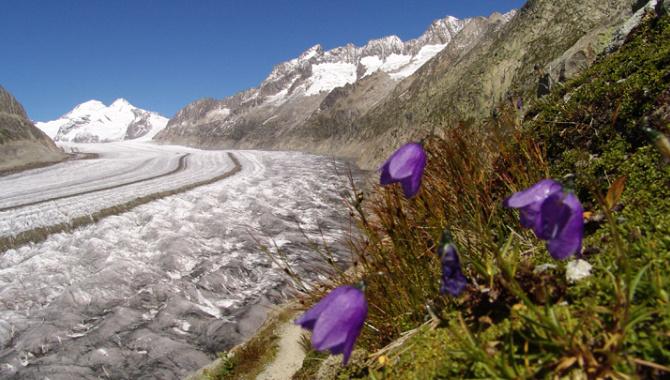 Höhenwanderung über dem Aletschgletscher