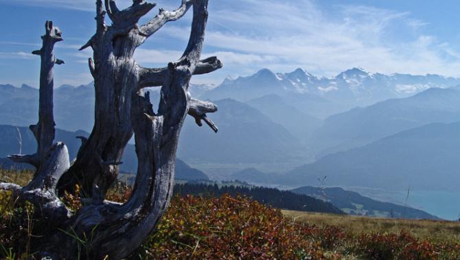Höhenwanderung auf dem Niederhorn