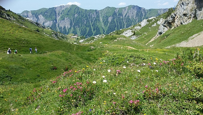 Meadows full of herbs and alpine flowers make for a specially flavoured milk.