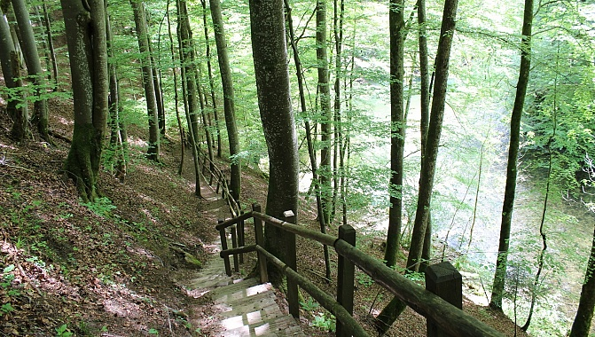 Forest trail through the gorge