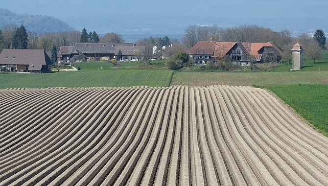 Fields near Murten