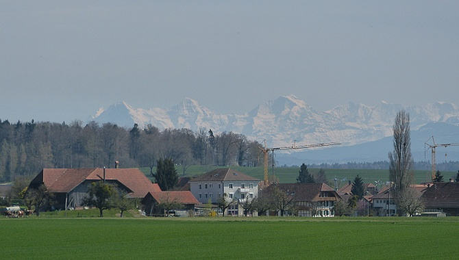 View of the Bernese Alps behind you as you walk toward Murten.