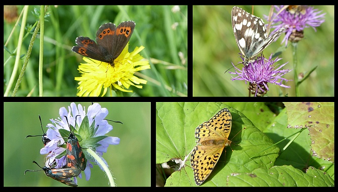 In summer there are hundreds of butterflies in these meadows.