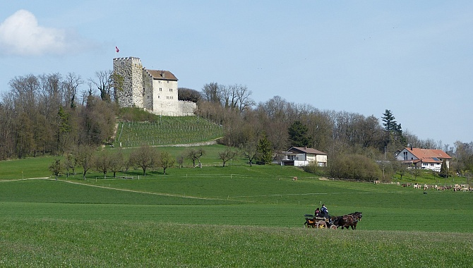 Habsburg Castle in the Aargau landscape