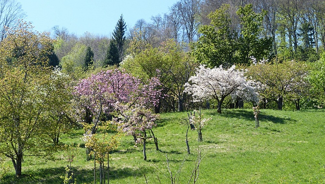 In the Aubonne Valley Arboretum