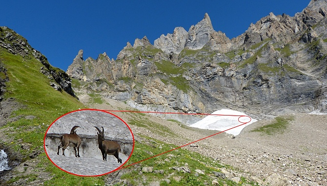 Near the pass (at Langenchnee), you might see ibex, but bring binoculars as they are high up.