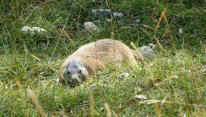 There are also lots of marmots in this valley
