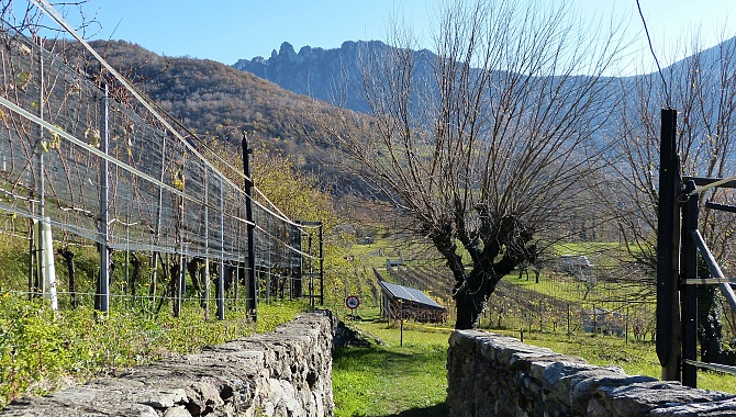 Part of the trail goes through vineyards and forests with views of the